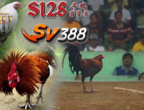 Sv388 Teraman