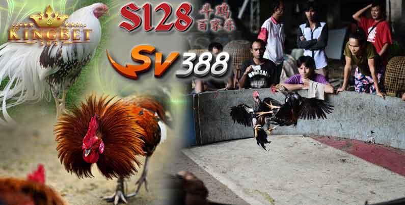 Sv388 Ayam Online