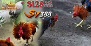 Bandar Sv388